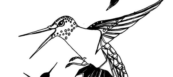 NewhummingbirdsSept18