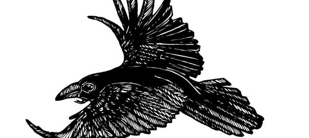 Raven 2016 small